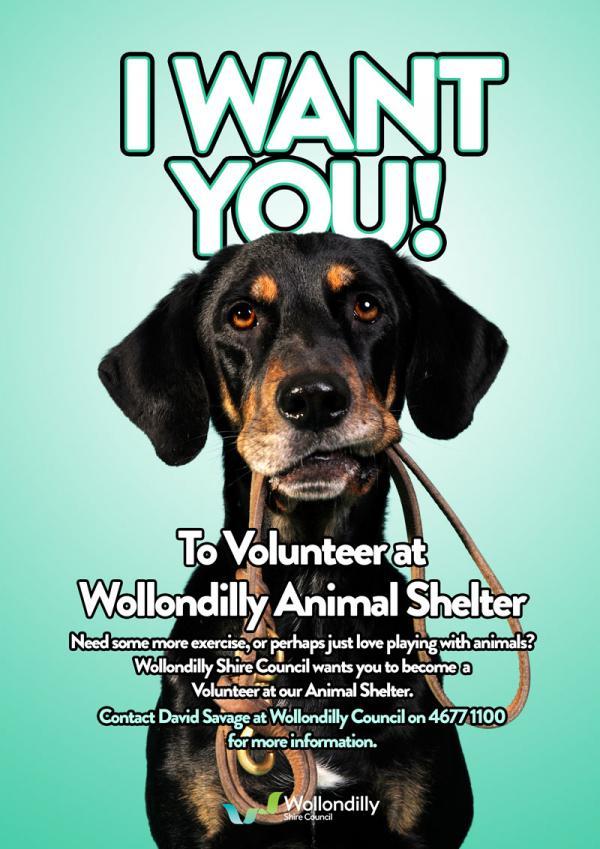 Animal welfare volunteer sydney